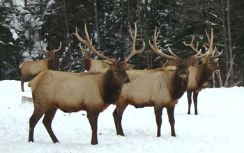 Image result for hunting in north idaho